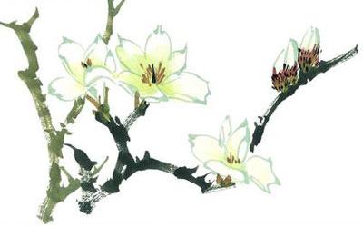 木兰花花语和图片